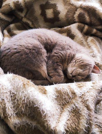 woolen blanket BIFL